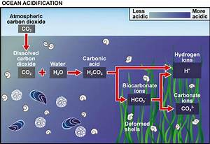 Ocean Acidification  Another Consequence Of Climate Change