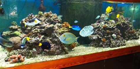 d 233 cor aquarium fish only