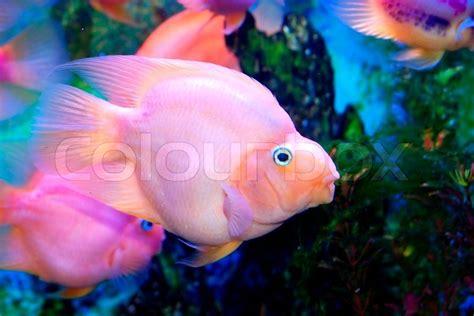 beautiful fish   sea stock photo colourbox