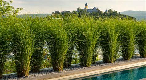 Garten Und Landschaftsbau Montabaur by Berg Garten In Montabaur Moderne Terrasse Pool