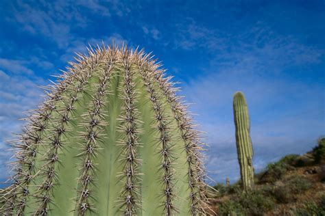 cactus wellness tips  phoenix arizona  cactus doctor