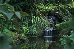 Tropical Rainforests Biomes Projects Shoebox