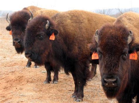 employee sues ted turners bison business nebraska