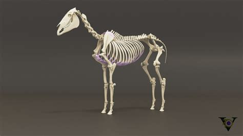 horse skeleton model  cgtrader