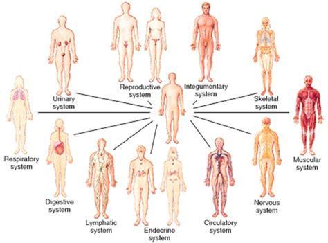 Anatomy & Physiology I Chapter 2 Flashcards
