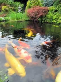 Koi Fish Pond Water Gardens