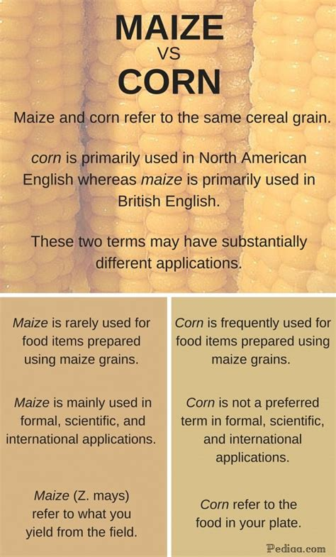 Difference Between Maize And Corn