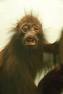 Ugly Monkey   Flickr - Photo Sharing!