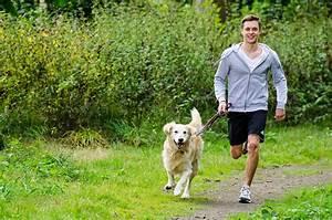 Hund Im Haus : urlaub und ferien mit dem hund im ferienhaus oder ~ Lizthompson.info Haus und Dekorationen