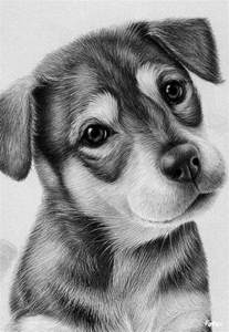 Cute Dogs Drawings in Pencil