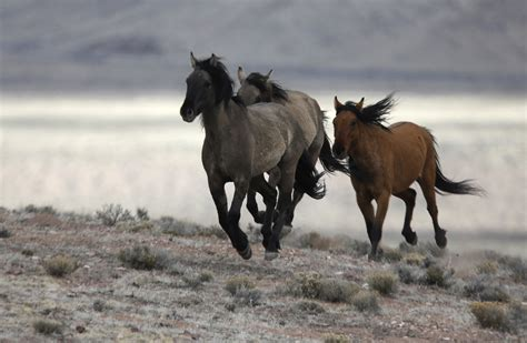 horses wild west land government sell its