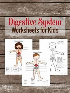 33 Best Digestive System Images On Pinterest