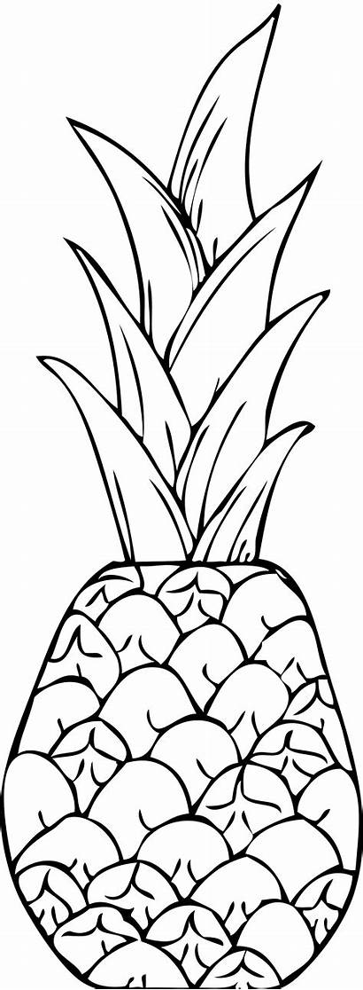 Coloring Pineapple Clipart Clip Pages Drawing Printable