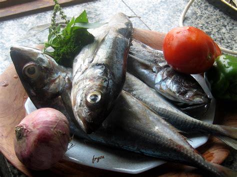 comment cuisiner du maquereau une recette le poisson maquereau et quot missol 232 quot le de fryou