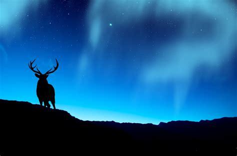 deer  northern lights  retina ultra hd wallpaper