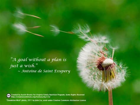 dandelion  quotes quotesgram