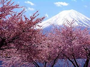 【壁紙】 春 桜のイメージ さくら 【1024x768】 : 【壁紙】 春 桜のイメージ 【さくら】 NAVER まとめ