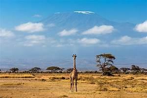 African, Adventure, Safari, 1, Day, Safari, To, Amboseli