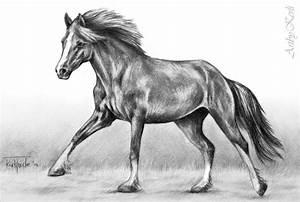 9+ Horse Sketches | Free & Premium Templates