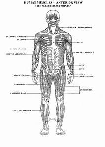 all the muscles in the human body diagram human anatomy With a body diagram