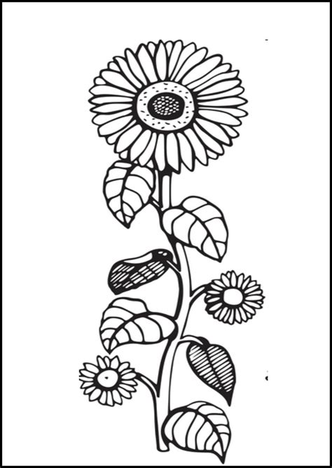 sunflower coloring pages coloringsuitecom