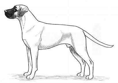 Mouth Cur Dog Drawing Breed Kennel United