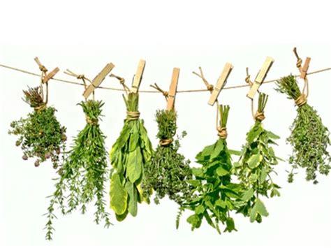 plante aromatique cuisine les plantes condimentaires