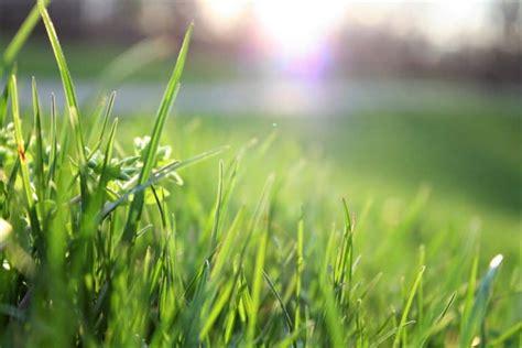 Im Rasen Loswerden by Unkraut Im Rasen Unkraut Effektiv Bek 228 Mpfen Und