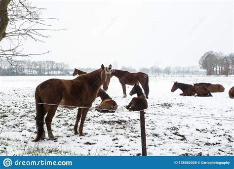 horses cold snow standing winter