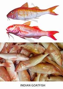 Confused over Fish names? | The treasure house of recipes ...