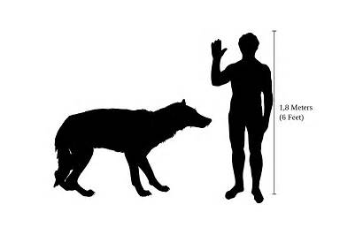 Wolf Dire Human Compared Wolves Extinct Talk