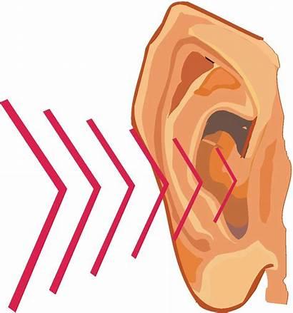 Sound Clipart Ear Hear Waves Noise Hearing