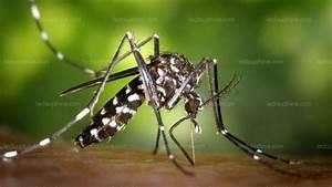 Qu Est Ce Qui Attire Les Moustiques : environnement moustique tigre alerte rouge pour les ~ Voncanada.com Idées de Décoration
