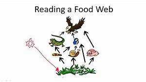 Food Chain   Video
