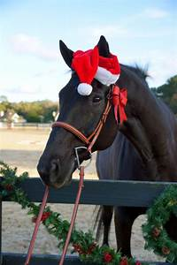 Best 30 Funny C... Funny Christmas Horse Quotes