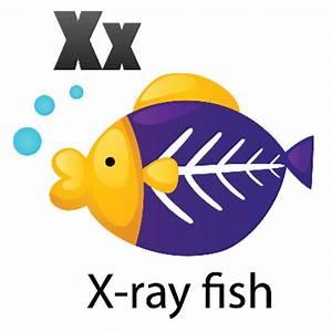 Animal Alphabet - X for X-Ray Fish   Clipart   The Arts ...