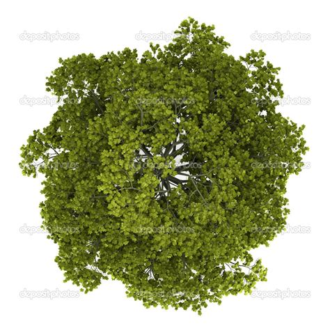 tree top view google search texture pinterest