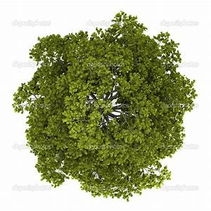 tree top view - Google Search | texture | Pinterest ...