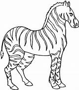 Zebra Coloring Pages Stallion Zebras Fish Empty Bowl Colornimbus sketch template