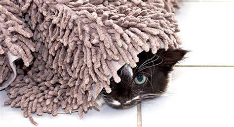 hilfe meine katze pinkelt ueberall hin  jetzt