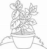Pages Basil Coloring Herbs Shrubs Vase Plant Colouring Herb Drawing Spices Printable Template Getdrawings Sketch Picolour Results sketch template