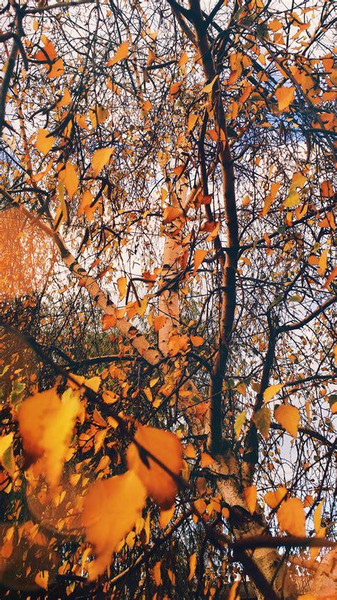 Foto de stock gratuita sobre árbol fondo de pantalla de