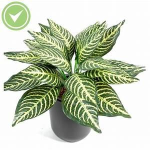 Mini Plante Artificielle : aphelandra mini 24 plante verte artificielle maison et fleurs ~ Teatrodelosmanantiales.com Idées de Décoration