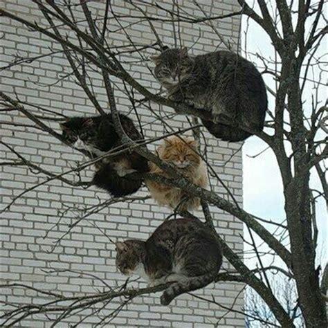 funny cats   tree luvbat