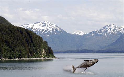mountains landscapes nature trees alaska whales wallpaper