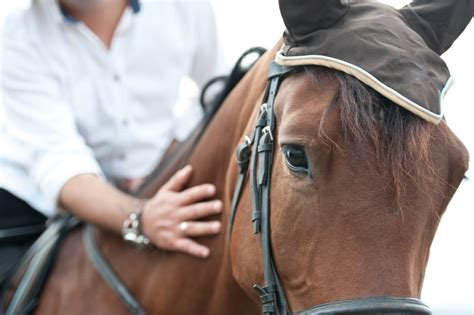 horse calming calm supplements ways many there calmer