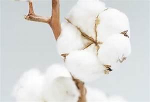 Bouquet Fleur De Coton : la fleur de coton ~ Teatrodelosmanantiales.com Idées de Décoration