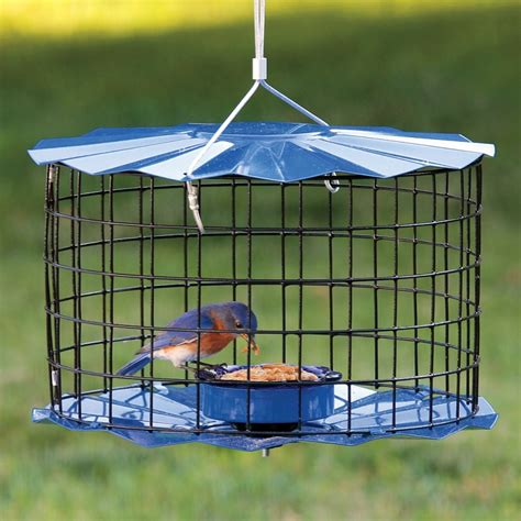 mealworm barrier guard caged bluebird feeder