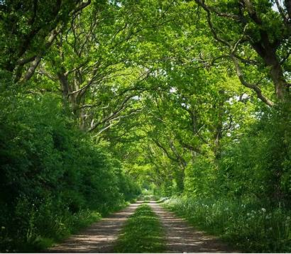 Landscape Wood Forest Nature Road Environment Tree