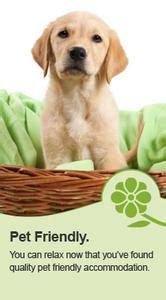 pet directory pet sitters  dog grooming school